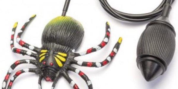Skákající pavouk