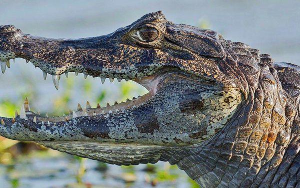Vstup do Krokodýlí ZOO aneb Vodní plazi naživo