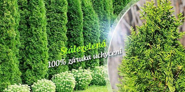 10 ks túje pro krásný živý plot + možnost hnojiva! Na výběr 3 typy: Thuja Brabant, Smaragd či Golden Smaragd