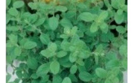 Majoránka - 800 semen - dodání do 2 dnů