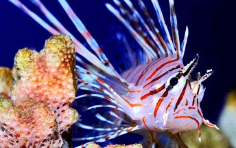 Seznamte se s rybkami z Mořského světa