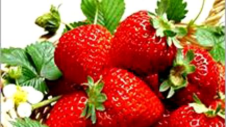 Lahodné a čerstvé jahody pěstované třeba na balkoně? Převislé hrnkové jahody - balení 200 semínek!