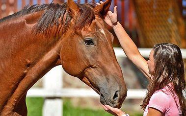 Seminář sebepoznání za asistence koně