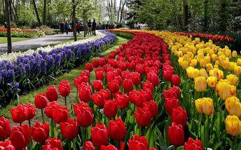 LAST MINUTE: Pětidenní Holandsko a květinový park Keukenhof s odjezdem ve středu 20.4.