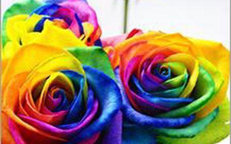 Originální duhové růže pro pěstování doma i venku. Barevné růže oživí každou zahrádku nebo květináč.