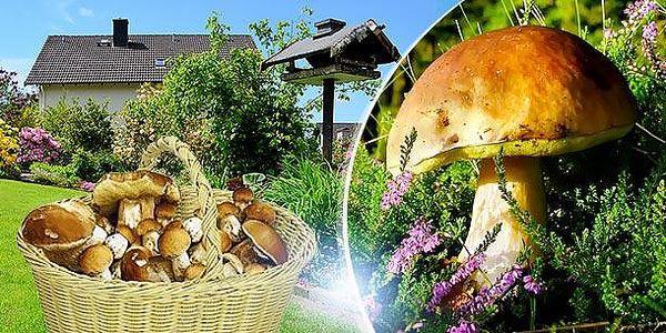 Vypěstujte si vlastní houby! 3 sadby pěstebního mixu 8 druhů lesních hub za cenu jedné. Poštovné zdarma!