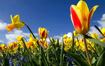 LAST MINUTE: Čtyřdenní Holandsko a květinový park Keukenhof s odjezdem ve čtvrtek 21.4.
