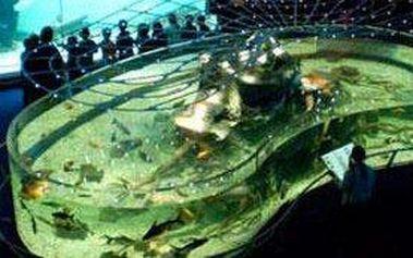Rodinné vstupné do Mořského světa