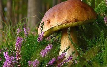 Vysaďte si na zahrádce své vlastní houby! 2 sady hub za jedinečnou cenu. Jednoduchá výsadba.