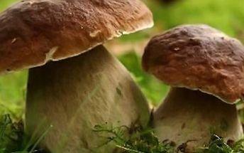 Sadba 8 druhů lesních hub za akční cenu!