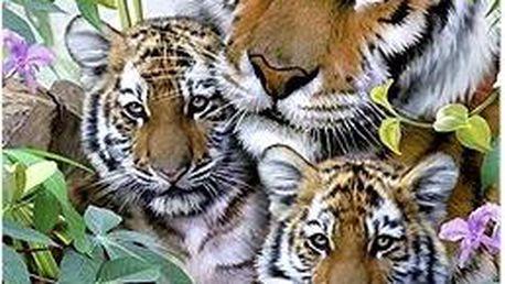 Tygří rodinka