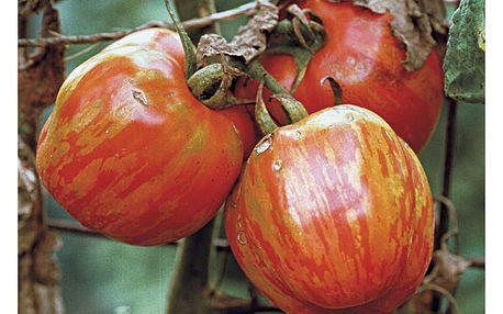 20 ks semínek barevně žíhaných rajčat