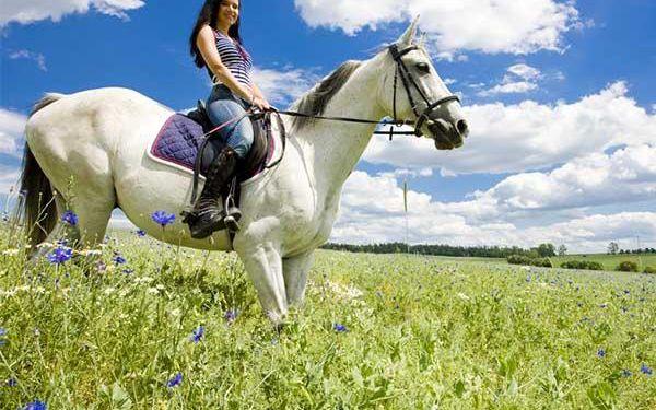 Léto s koňmi na Farmě Vysoká - agropobyty
