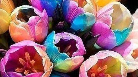 Duhové tulipány 50 semínek