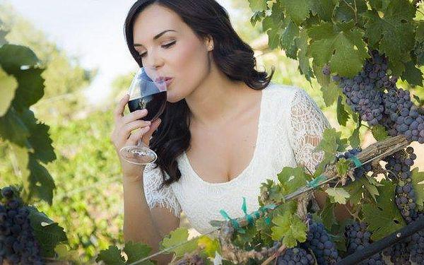 Jižní Morava s degustací vína v penzionu