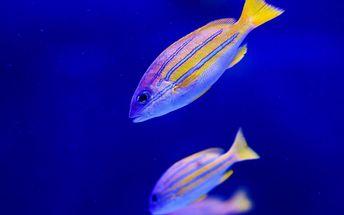 Vstupné na akvaristickou burzu Ryby a rybičky