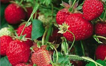 Balení 50 semínek - jahody