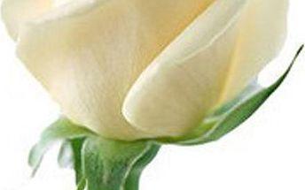 20 semínek bílé růže