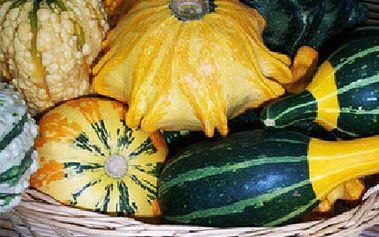 10 semínek dýní - mix typů