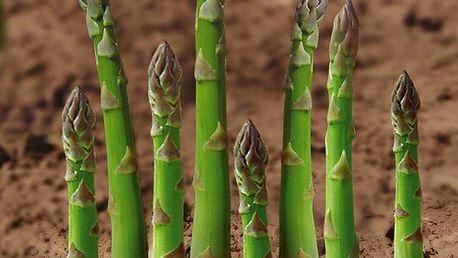 20 semínek chřestu