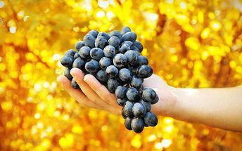 Roční adopce vinné révy s láhvemi vína i degustací na jižní Moravě