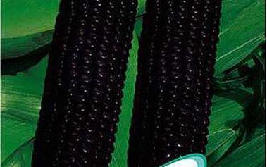10 semínek - černá kukuřice
