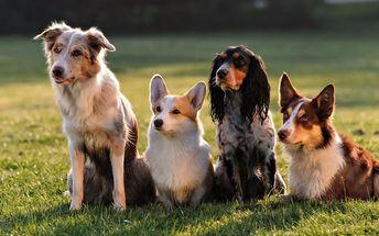 Báječný den plný psích kusů ve psí školce