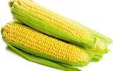 Kukuřice cukrová - 20 semínek - dodání do 2 dnů