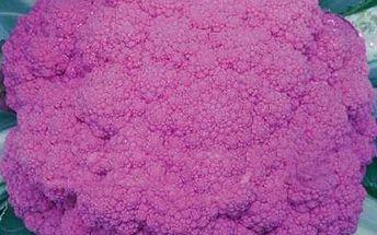 Fialový květák - sada 20 semínek