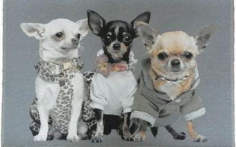 Předložka Chihuahuas 75x50 cm