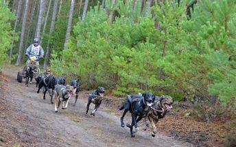 Jízda se psím spřežením - mushing: 60 minut jízdy pro 1 osobu - Vysočina, Žďárské vrchy