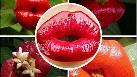 Psychotria elata - Smyslný polibek - 100 semen