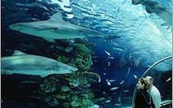 Tropicarium v Maďarsku. Zájezd do největšího akvária ve Střední Evropě. Úžasný zážitek v podvodním světe!