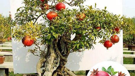 20 ks semínek granátového jablka - poštovné zdarma