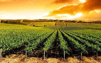 Za vínem na Moravu - až 6denní pobyt pro 2
