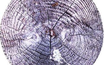 Aldo Sedák Dřevo šedá, 40 cm