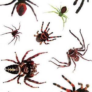 Dočasné tetování - Pavoučci - dodání do 2 dnů