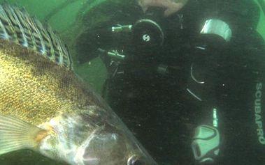 Ponor v doprovodu zkušeného potápěče + zapůjčení potápěčské výstroje v bohatě zarybněném lomu Srní.