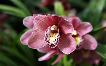 Velikonoční Drážďany s výstavou orchidejí, Drážďany, Německo, autobusem, bez stravy
