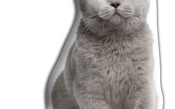 Polštářek Britská krátkosrstá kočka