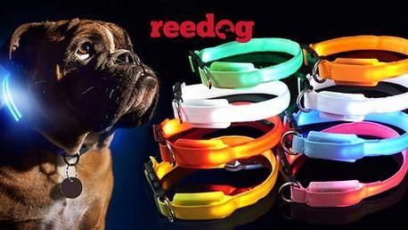 Svítící LED obojek pro psy i kočky s výměnnou baterií nebo dobíjením přes USB