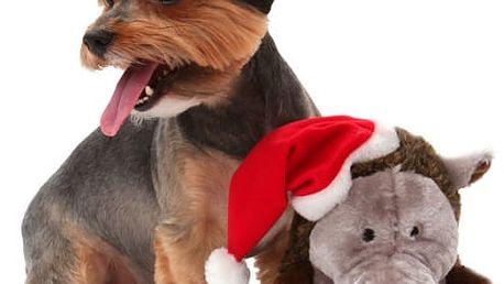 Chrochtající prase pro psy