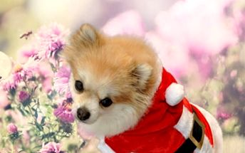 Vánoční kabátek pro pejska v podobě Santa Clause