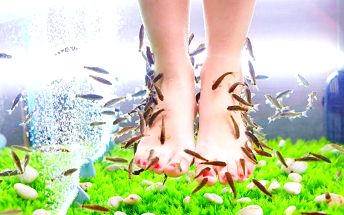 Blahodárná koupel nohou s rybkami Garra Rufa