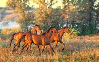 Tři jarní dny na koňské farmě na jižní Moravě