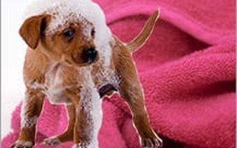 Psí ručník pro snadné osušení srsti pejska, vychytávka pro milovníky pejsků, vhodné jako vánoční dárek pro vašeho čtyřnohého miláčka!