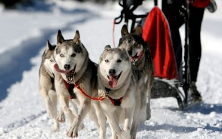 Mushing - jízda se psím spřežením v Královehradeckém kraji