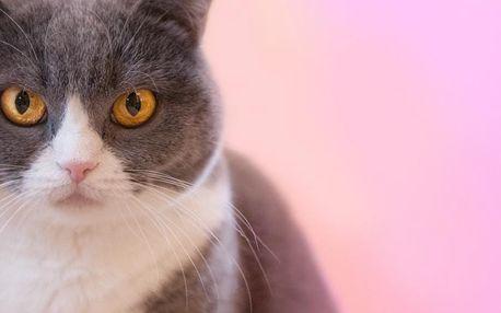 Fotografování domácích mazlíčků ve Středočeském kraji