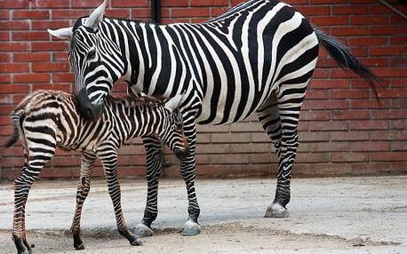 Ošetřovatelem v zoo v Královehradeckém kraji