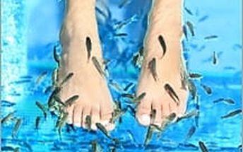 2 vstupy na pedikúru pomocí rybiček Garra Ruffa za skvělou cenu. Svěřte své nohy do péče rybích léčitelů!